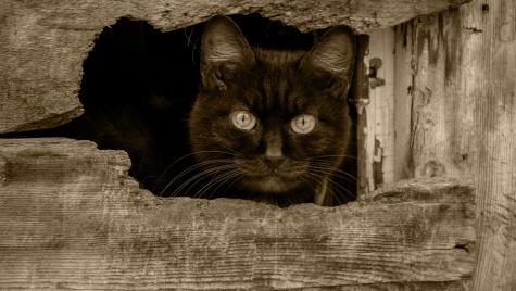 Заставка для - «Лёнькин кот» – это про животных и людей