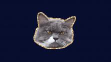 Заставка для - Как выплатить кредит, если вы кот